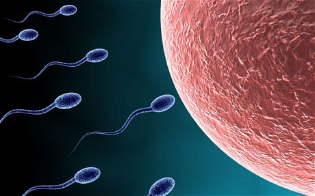 sperm cells swimming towards female ovum for fertilization